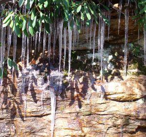 frozen water arboretum drive