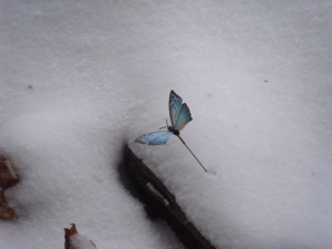 blue butterfly in the snow